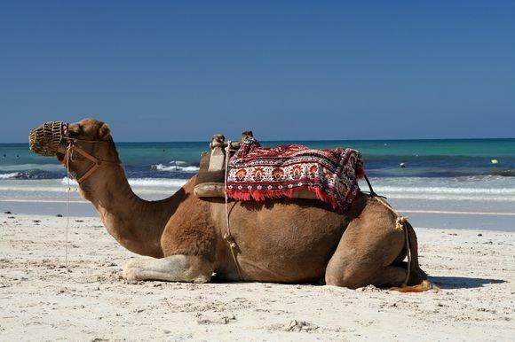 Mon voyage en Tunisie